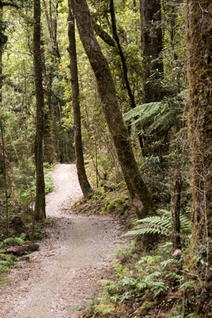 West Coast Wilderness Trail vor Lake Kaniere